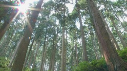 Forest_photo__